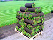 Посев и стрижка газонов. Качественно!!!